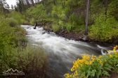 Idaho, west, Adams County, Council. The Middle Fork of the Weiser River flowing through the Payette National Forest in spring.