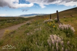 Idaho, Adams County, Council. Spring wildflowers along the Middle Fork Weiser River Road.
