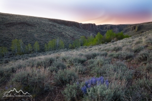 IDaho, Southwestern, Owyhee County, Grand View. Hicks Springs in the Owhee Desert on a spring dawn.
