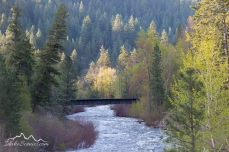 Idaho, North Central, Riggins. Morning sun along the Little Salmon River in spring.